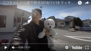 ココちゃんの比叡平散歩.png