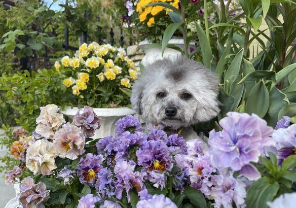 トーカとお花.pngのサムネイル画像